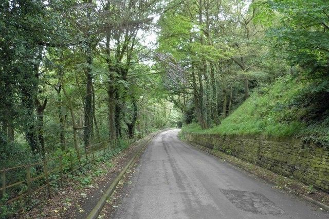 Yew Trees Lane
