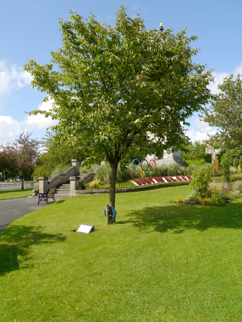 Whitehead Gardens, The Workers' Tree