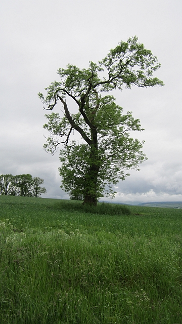 Arable land near Longfauld