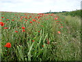 TQ5265 : Poppy field near Eagle Heights by Ian Yarham