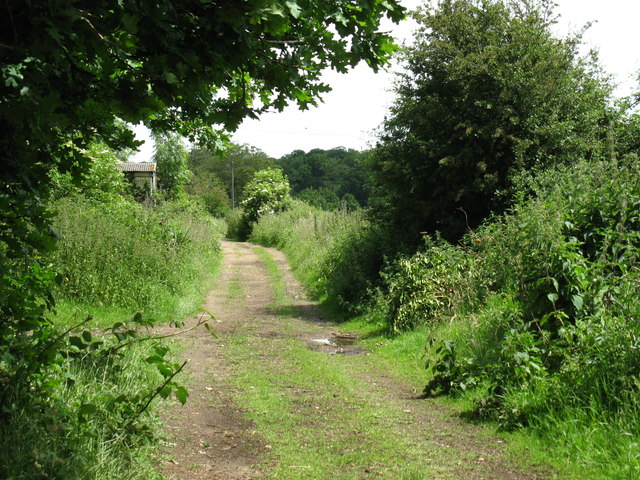 Path at Greendean farm