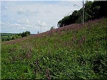 S6233 : Foxglove Farm by kevin higgins