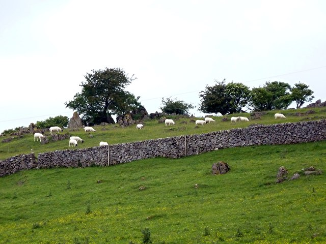 Sheep grazing on Roystone Rocks