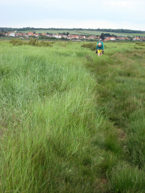 Scolt Head Island Traverse 11b: Crossing the salt-marsh