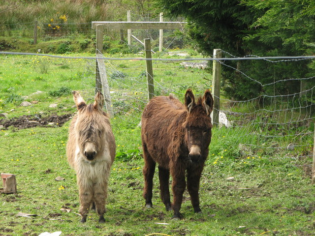 Two Donkeys, Donegal