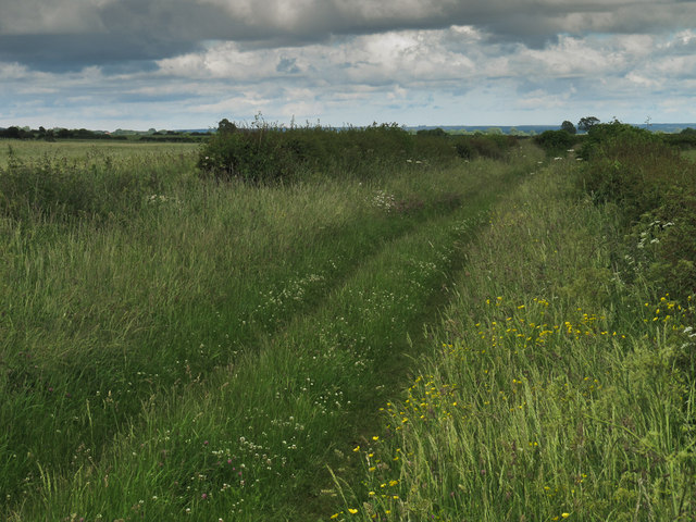 Grassy track towards Bottomfield Lane