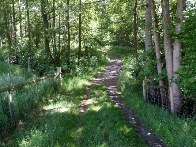 Track into woods SE of Gigrin Farm, Rhayader
