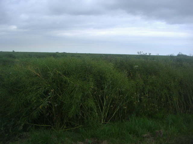 Dengie Marsh from Bridgewick Road