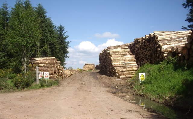 Logs harvested from Norham Wood