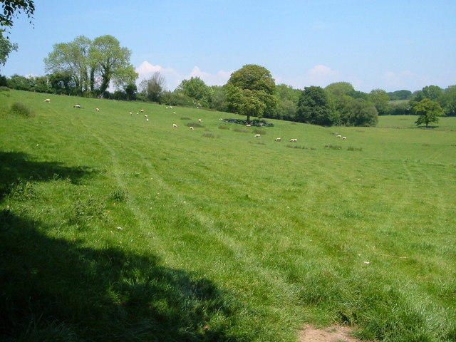 Pasture near Well Farm
