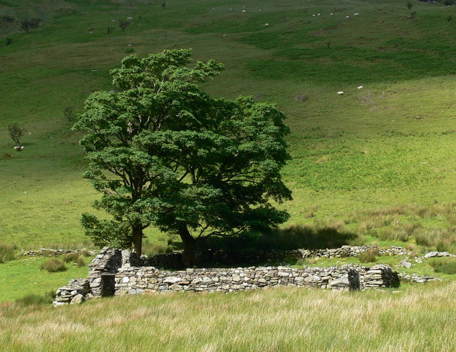 Ruin and trees in the Nant Ffrancon