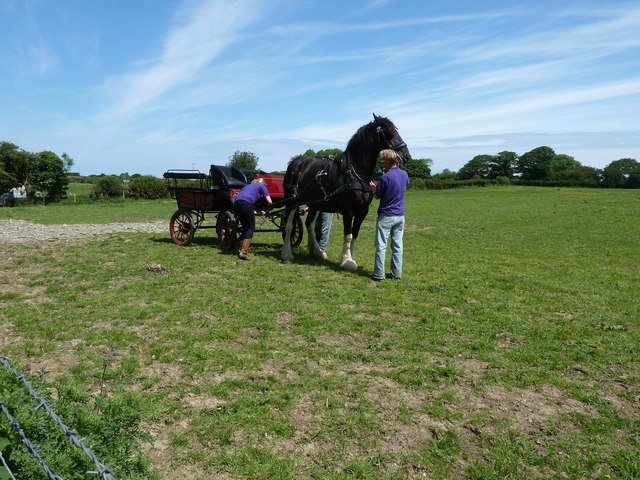Horse and carriage preparation at Dyfed Shire Farm