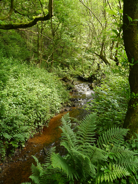 Staly Brook, Castle Clough