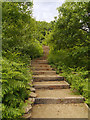 SD9901 : Steps, Cowbury Dale by David Dixon