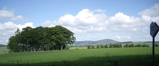 View of Terry Chapel copse in summer