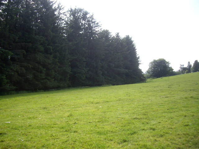 Woodland edge near Corse House