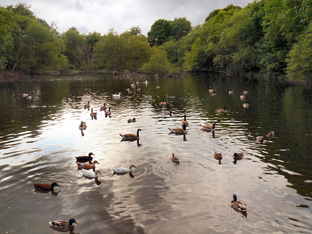 Duck Island, Carrbrook