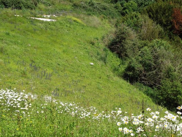 Combe Head on the Brockham Hills