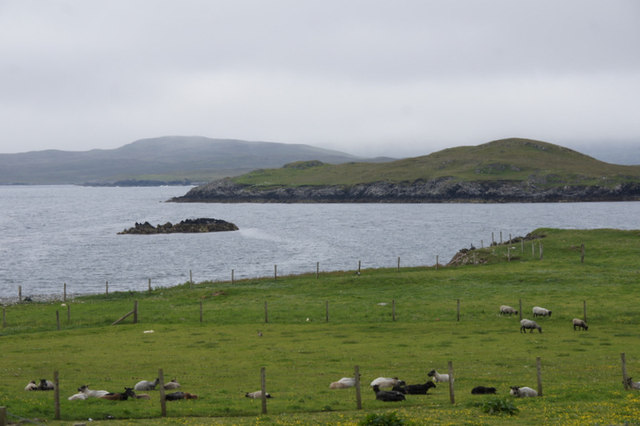 Sheep at Gletness