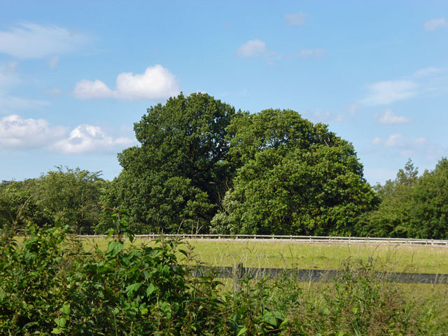 Trees north of Broxhill Road