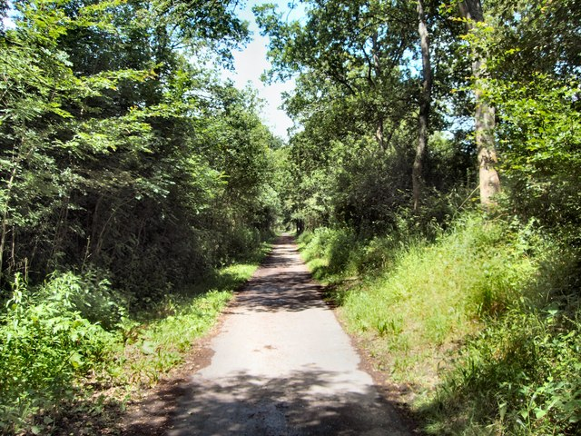 Cuckoo Trail near Horam