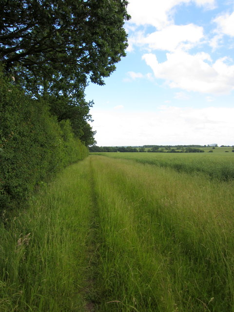 Path by the edge of Lliby Wood