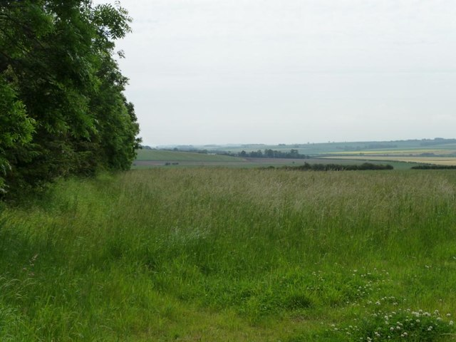 Tall grass next to Argham's trees