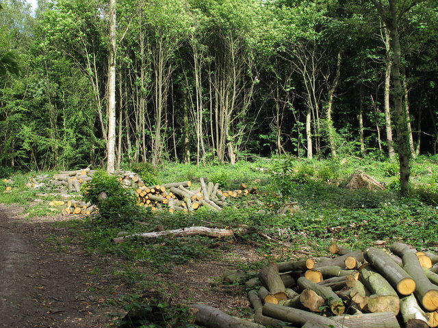 Cleared area and cut logs