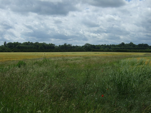 Farmland off Marholm Road
