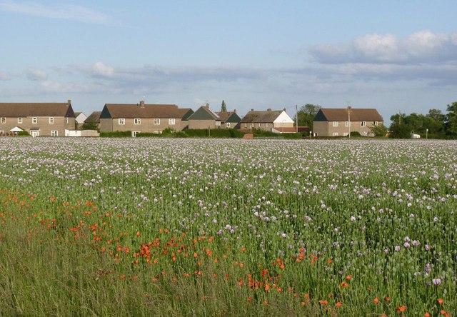Poppy crop at Digby