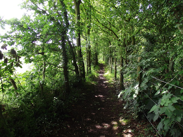 Footpath by a wood