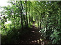 SJ6594 : Footpath by a wood by Phil Platt