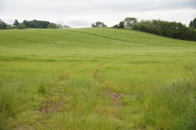 Fields at Campsie, near Guildtown