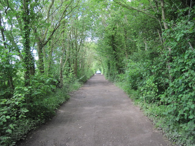 Track  and  Bridleway  Wallingwells  Wood
