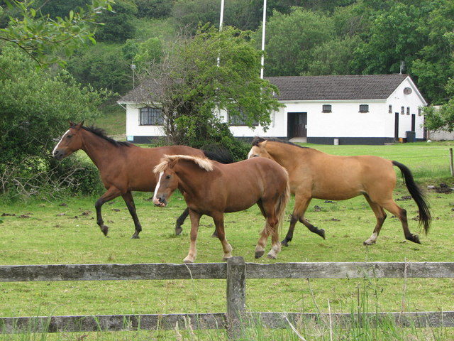 Horses, Donegal