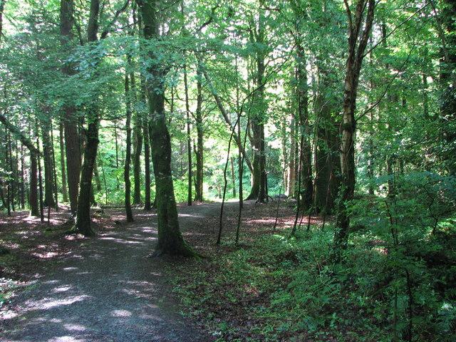 Drumboe woods, Ballybofey