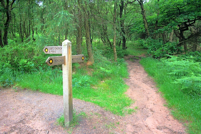 Path Junction, Forest Wood