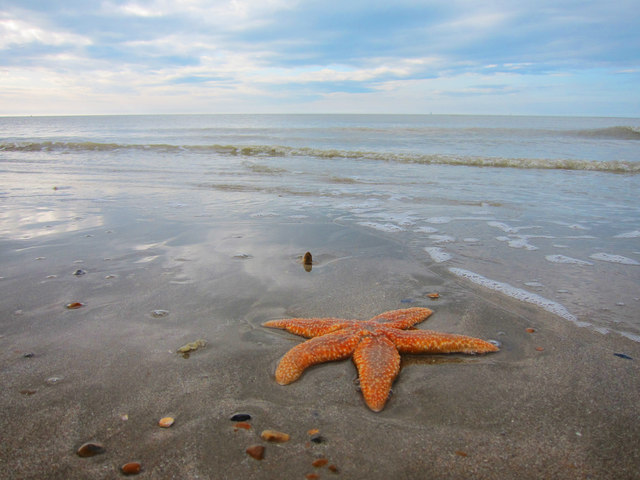 Star fish at Normans' Bay Beach