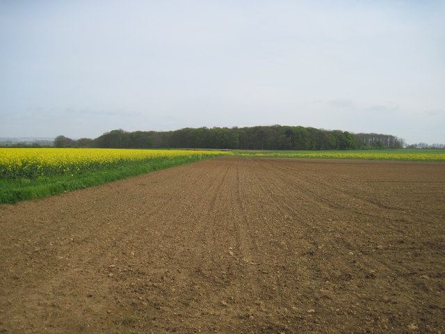 Fields  to  Willwick  Hill  Plantation
