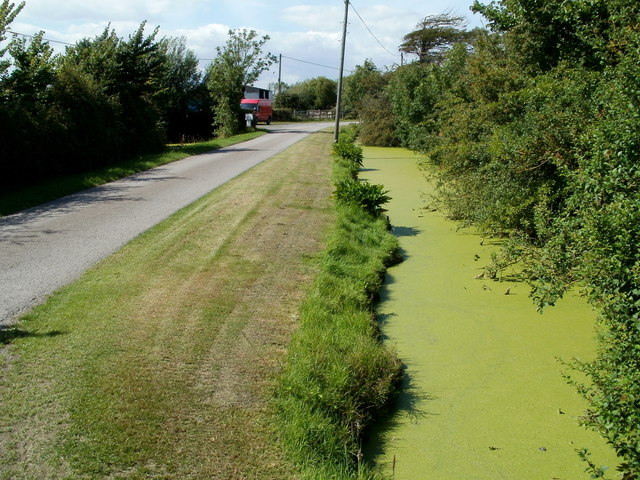 Algae-covered rhyne, East Hewish