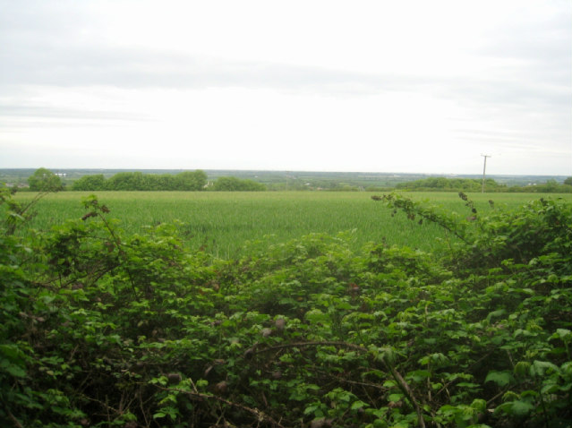Farmland on Chapel Hill