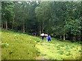 SU8935 : Walking in the rain : Week 28