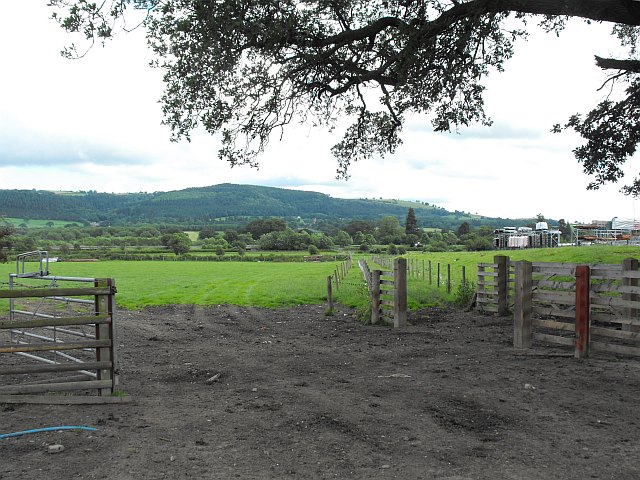 Fields adjacent to Coed y Dinas