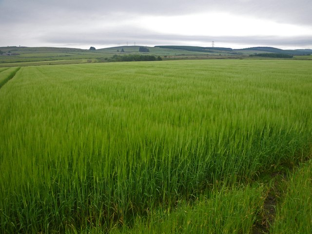 Endless barley fields stretching to the southeast