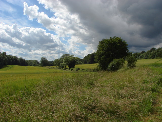 Field Boundary, Hog's Back