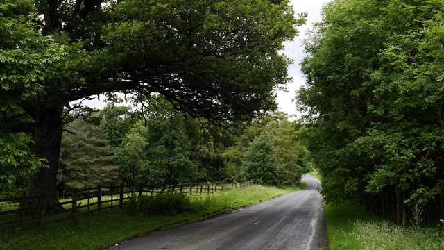 Road descending to Carrick's Haugh