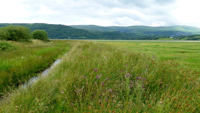 Edge of RSPB Ynyshir