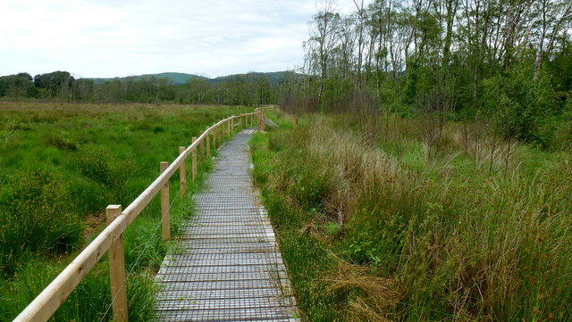 Boardwalk at Ynyshir