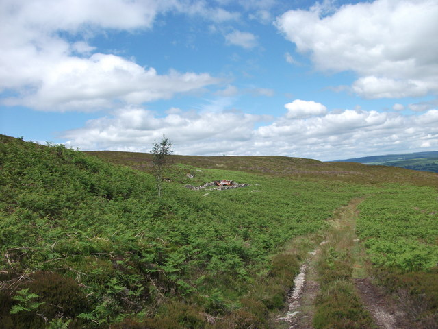 Looking northward on the heather moor
