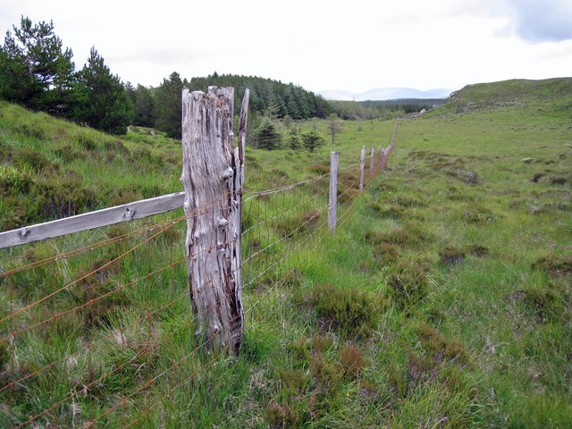forest fence richard dorrell geograph britain and ireland. Black Bedroom Furniture Sets. Home Design Ideas